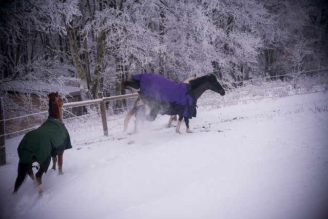 202001095 Horses and Dogs in Snow_169