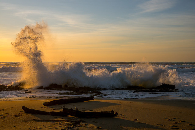 The Sea Scolded Gold