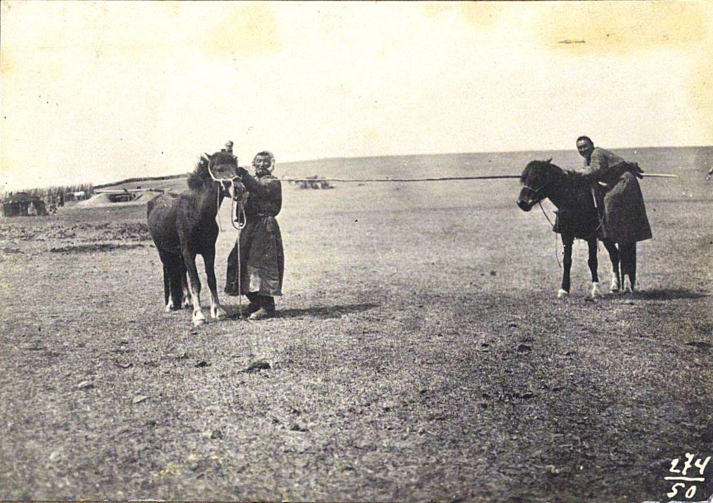 274. Ловля лошадей «икрюком»