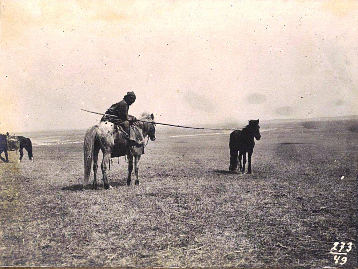 273. Ловля лошадей «икрюком».