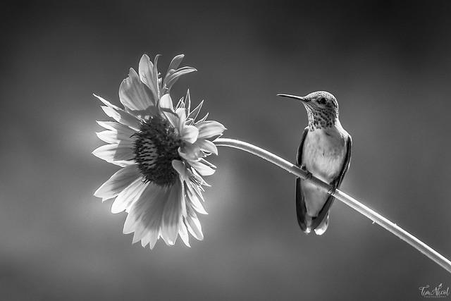 Summer in Black & White
