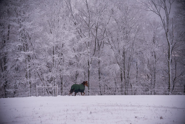 202001095 Horses and Dogs in Snow_230