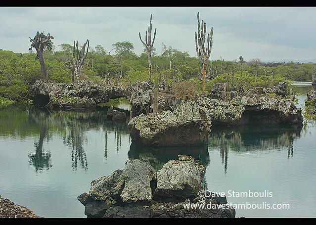 Desert and sea scenery at Los Túneles, Isla Isabela, Galapagos Islands, Ecuador