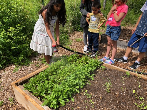 Summer Camps At The Intersection Of Art Nature 2020 Lynden