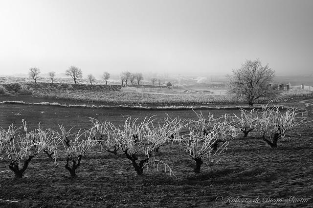 Levanta la niebla en la viña.