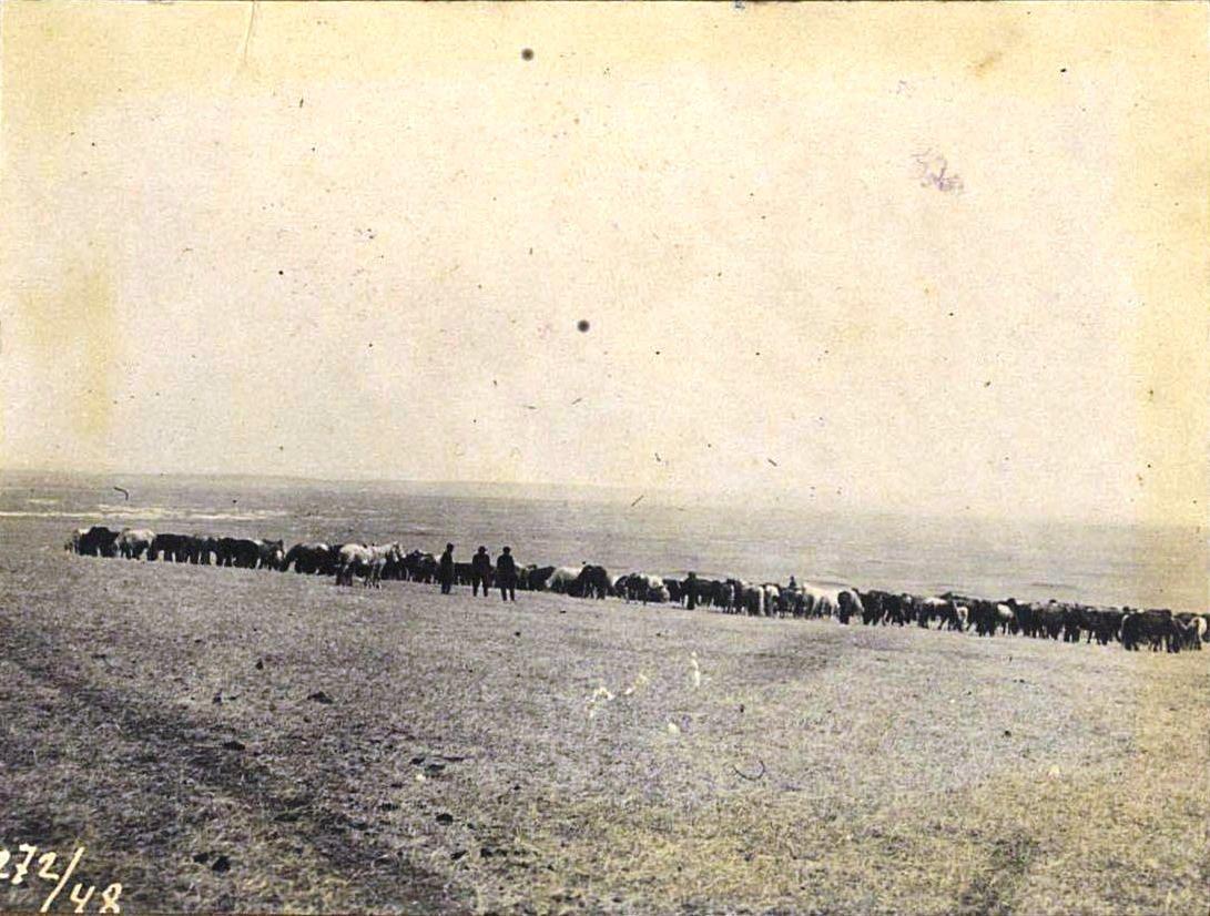 272. Табун лошадей в Забайкалье