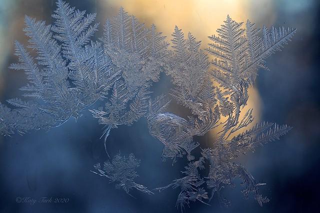 Denizens of Deep Cold
