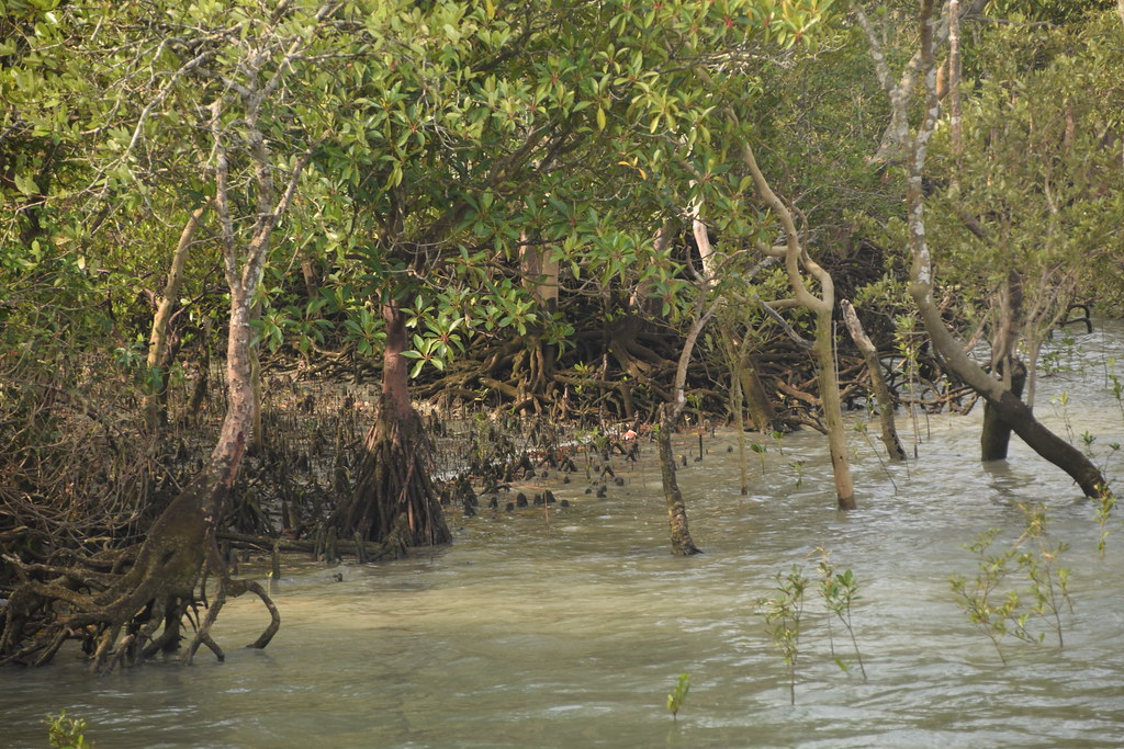 mangrove forest, sundarban