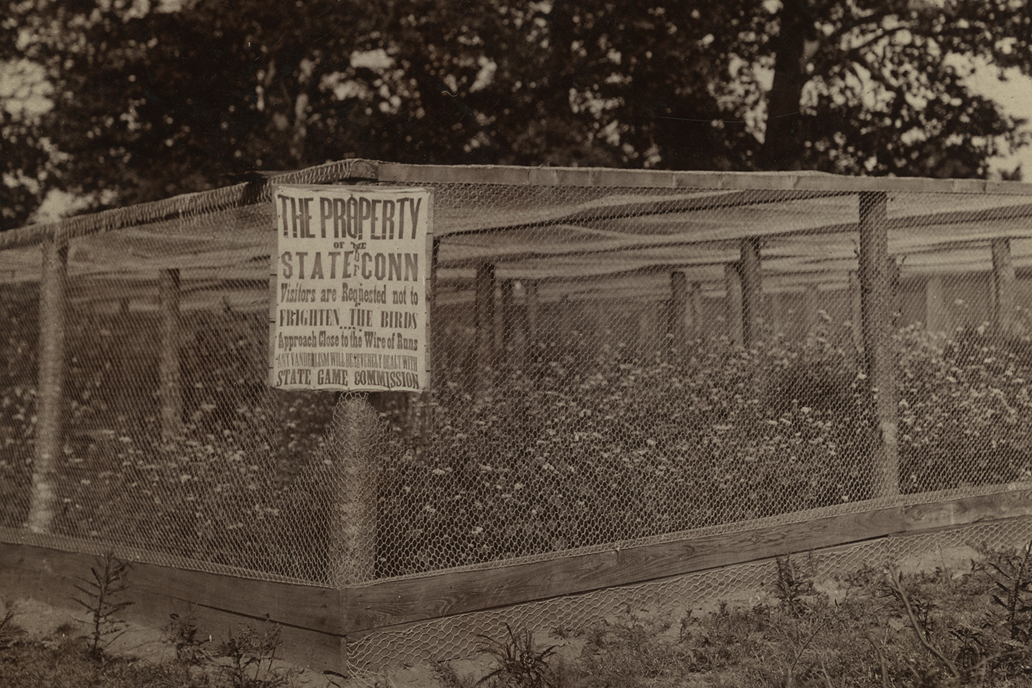 "Outdoor bird enclosure captioned, ""Quail work at Storrs - Season of 1911."" Photo by H.K. Jobs"