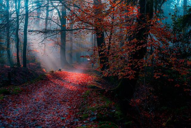 Friesland bos forest