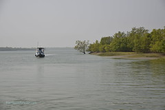 Sundarban Safari