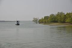 Sundarban Safari