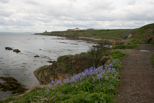 The coast near Pittenweem
