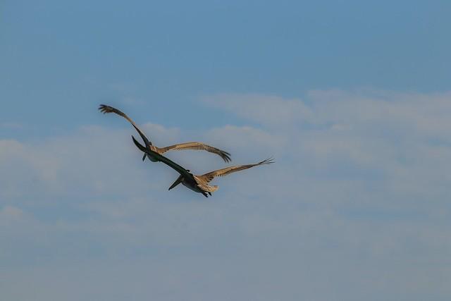 Birds of a feather over @pismobeachca @visitcalifornia   #teamcanon #smugmug #mybeach #myhome #nature #seascapes #slocounty #centralcoast #soslocal #sanluisobispo #pismobeach #seagull #ocean #seagulls #canon #canonfanphoto #canonfavpic #canonbringit #cano