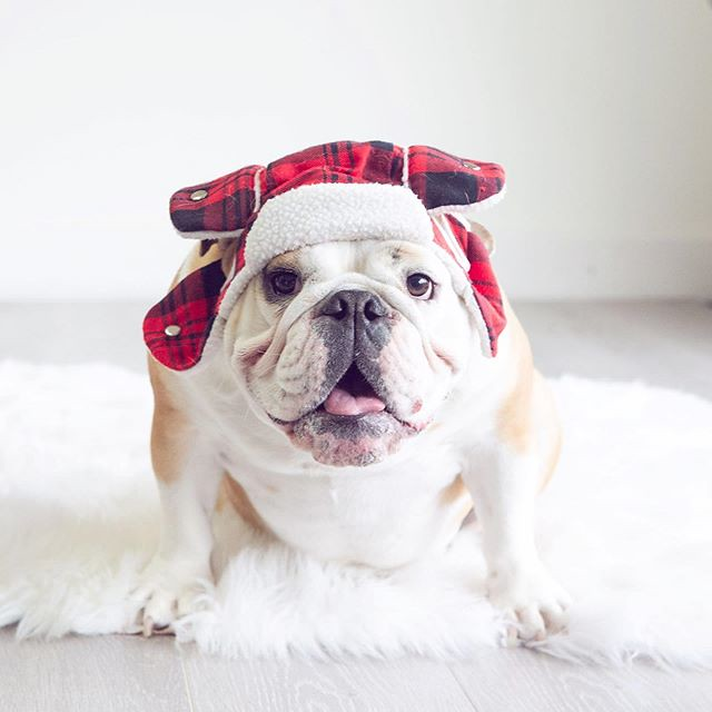 Pretty sure Penny loves to dress up. You know... because treats ;)