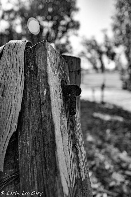 Old Ranch Fence