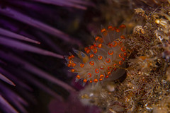 nudibranch2Jan11-20