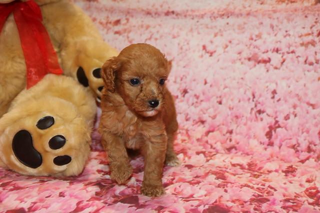 1 Cutie Patootie 1 lb 3.5 oz 5W old (46)