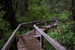 Bridge through the Redwoods