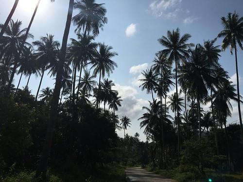 サムイ島やしの木ロード徘徊、そしてエスプレッソトニック休憩