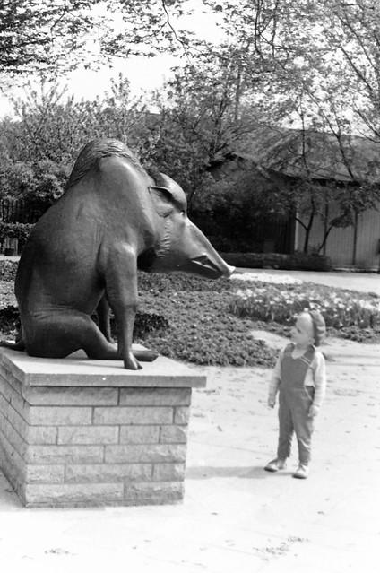 Altes DDR Foto 70er Jahre - Tierpark Berlin, Wildschweinskulptur