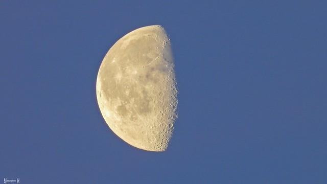 Moon - 7980