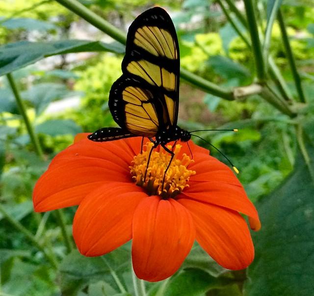 Amorphous amber  .  .  .