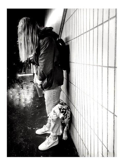 A dalmatian on the subway