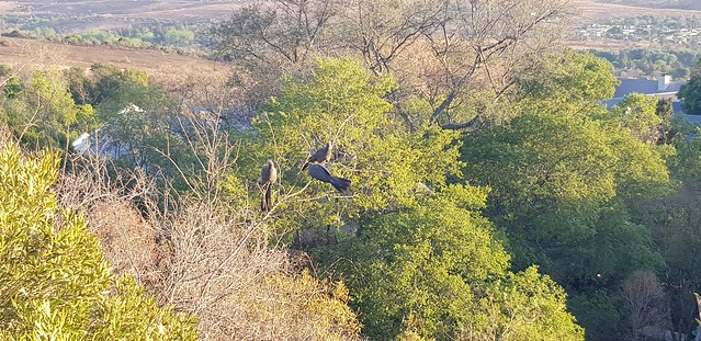 Birds on the treetop