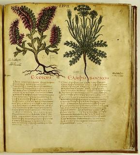 Dioscorides codex napoletanus