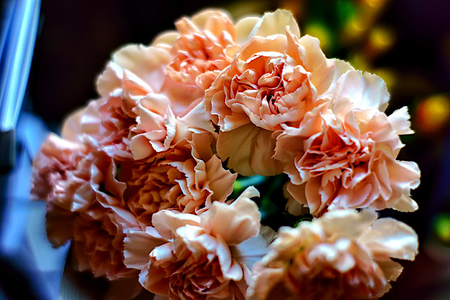 Do you like carnations?