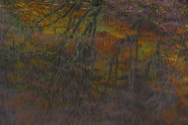 Root of Autumn III