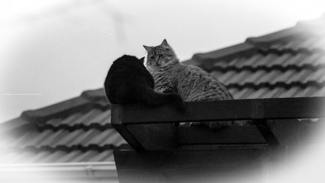 Confrontation on a rooftop
