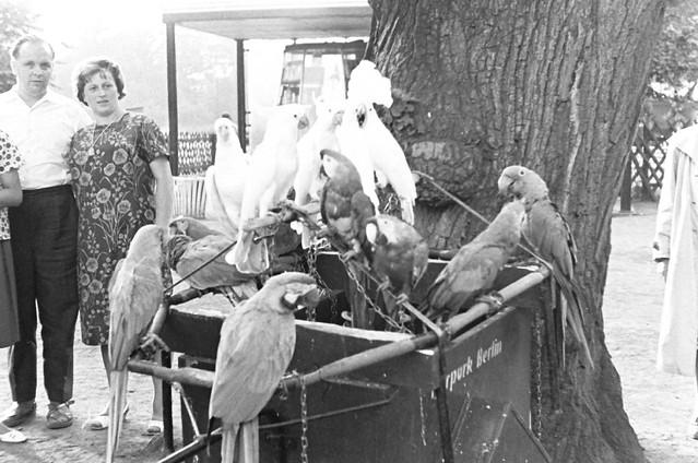 Altes DDR Foto 70er Jahre - Tierpark Berlin, Papageien und Kakadus