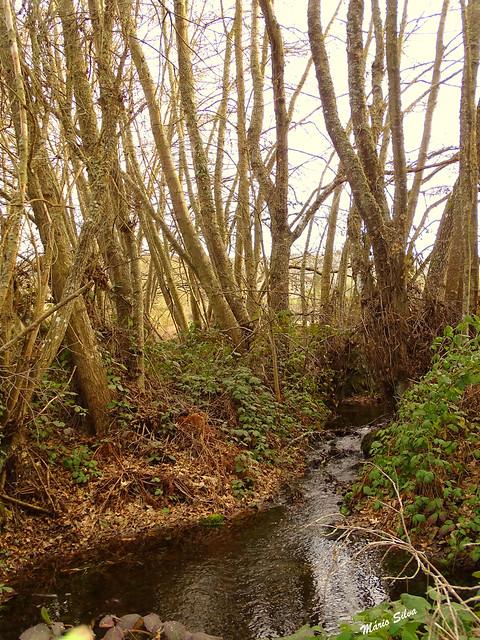 Águas Frias (Chaves) - ... a água corre  com movimento lento e cadenciado pelos ribeiros ...