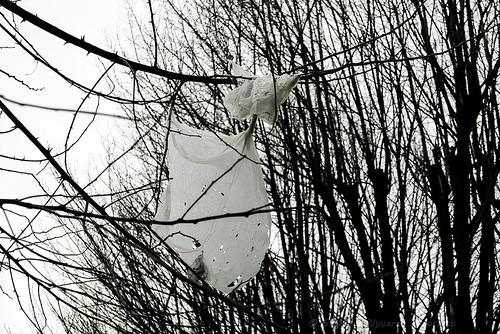 Nel vento