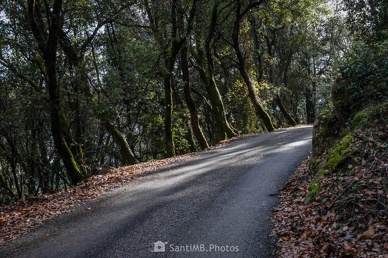 Camino de Molera a la altra de la Vinyota