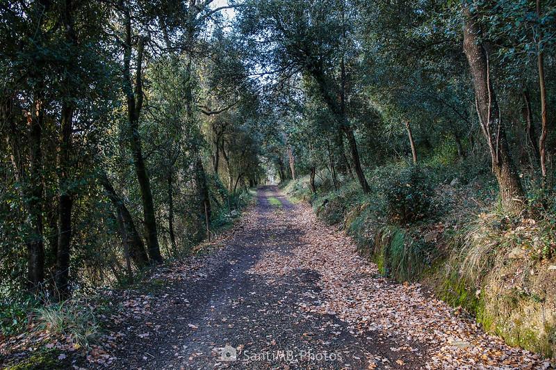 Camí de Pererols