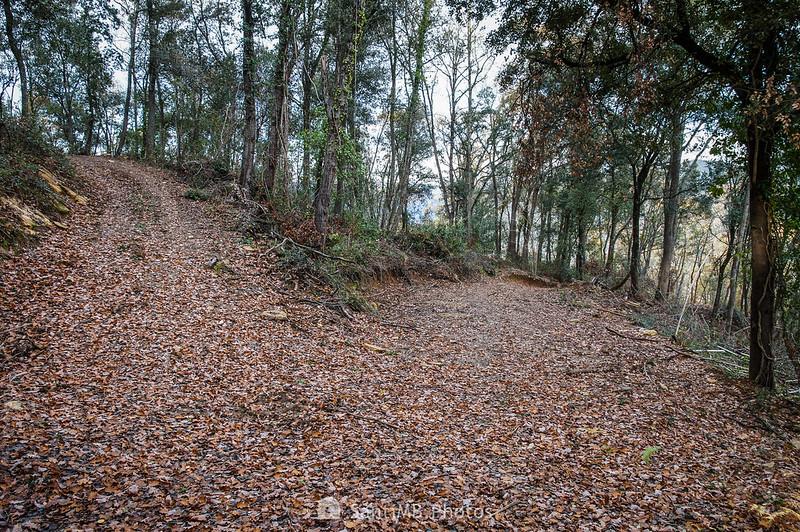 Bosc del Sabater en la Serra de Molera