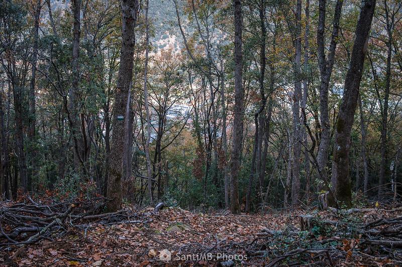 Sant Joan les Fonts a través del Bosc del Sabater