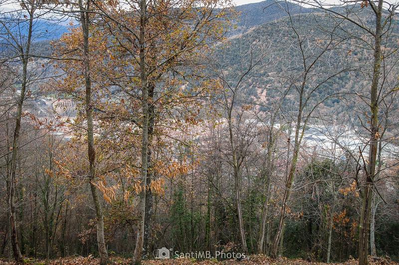 Sant Joan les Fonts a través del bosque