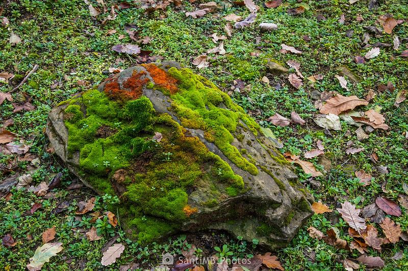 Musgo y plantas sobre una roca en la Serra de Molera