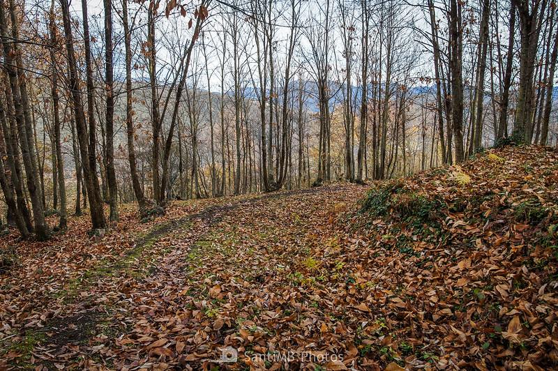 Bosque de castaños entre Repàs y Repassot
