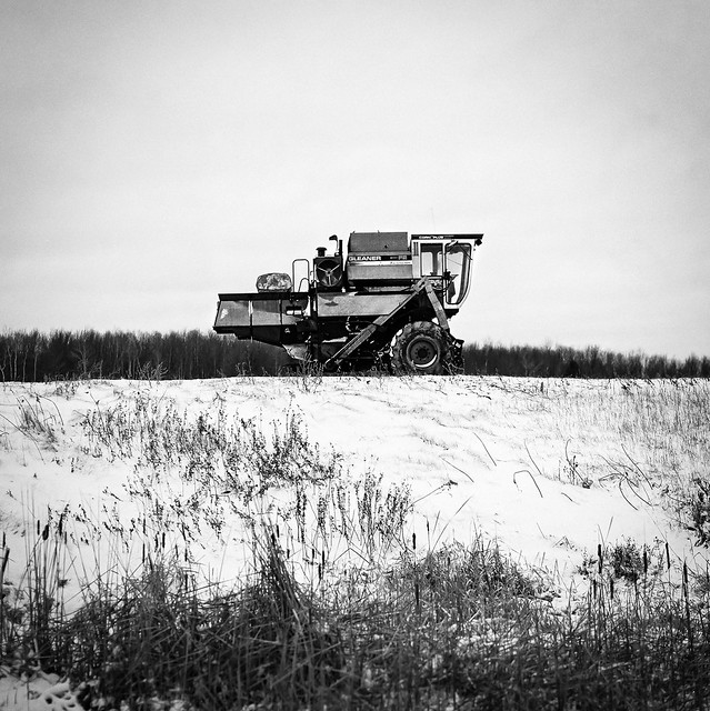 Grasshopper. Hasselblad 500 c/m, Kodak TX400.