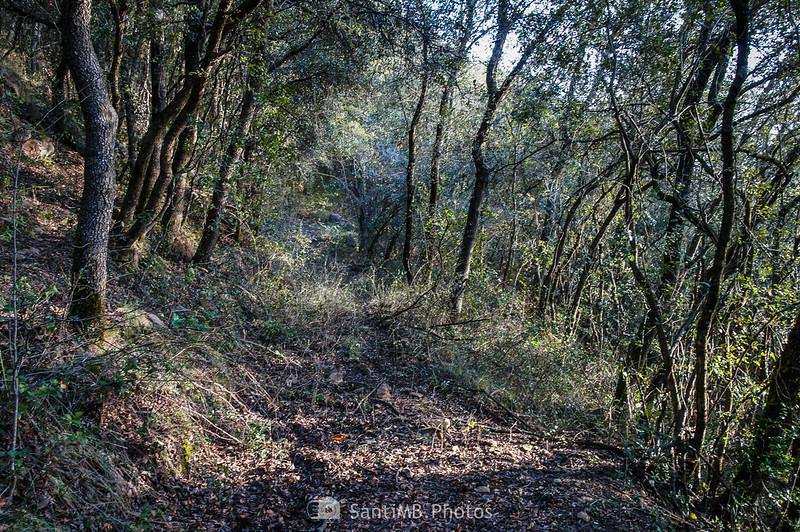Camino de Pererols al volcán del Cairat