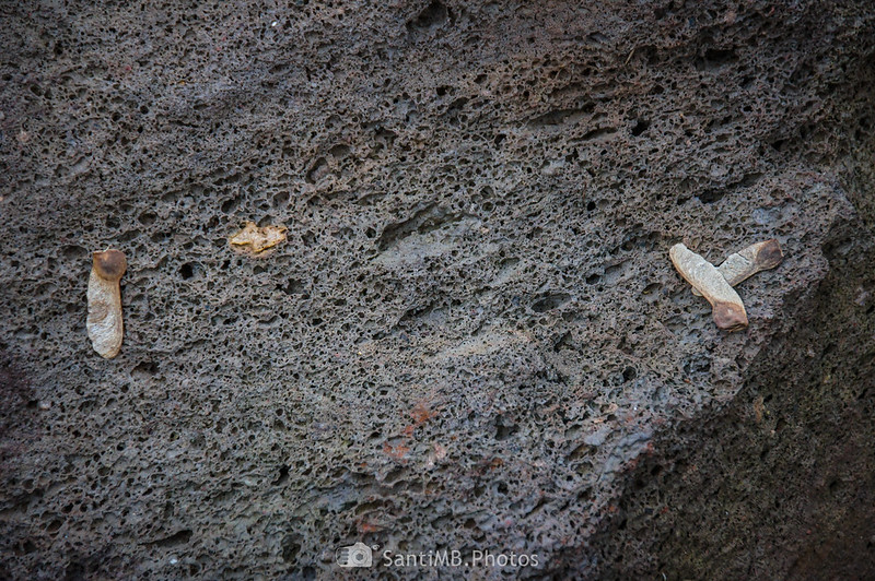 Roca volcánica en la Reserva Natura Parcial del Volcà Aiguanegra