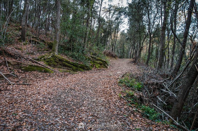 Por el Bosc de Sabater en la Serra de Molera