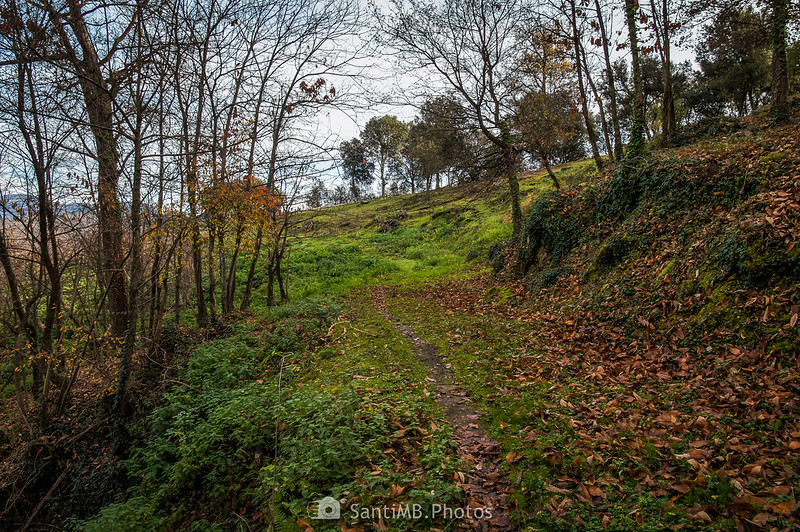 Saliendo del bosque de castaños entre Repàs y Repassot