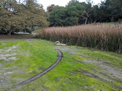 Tracks by the stream