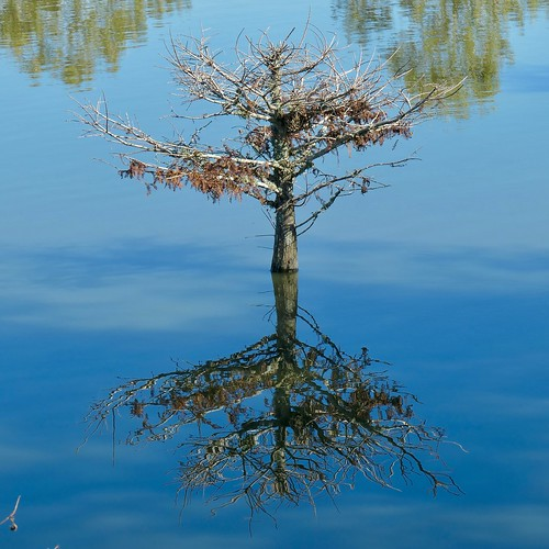 tree landscape blue reflection texas